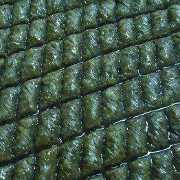 Yeşil Kıvırcık Fıstıklı